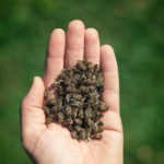 Handful_Of_Dead_Bees