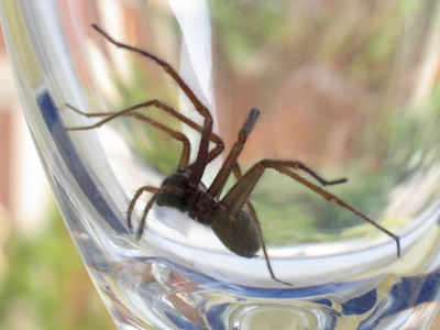 spider in glass