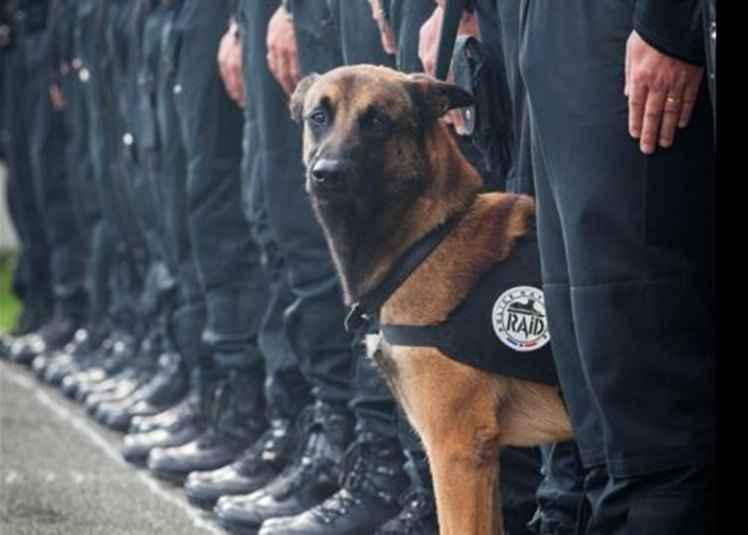 O cachorro era integrante da equipe de policiais que combatem o terrorismo em Paris