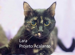 LARA_acalanto