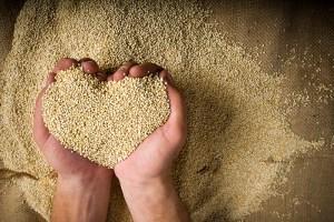Equipe internacional estuda genoma da quinoa