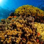 Investigan la respuesta de los corales al calentamiento global