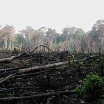 Brasil promete eliminar la deforestación ilegal el 2030