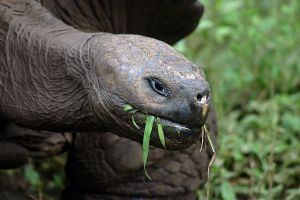 funiber-Galápagos-tortuga