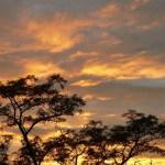 Mapeando los bosques en los biomas áridos
