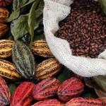 Estudio indica que consumo de chocolate puede disminuir el riesgo de arritmias