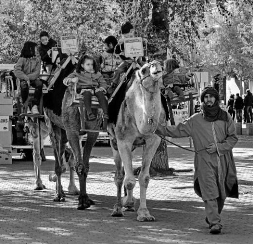Por la mañana. Foto de la Alameda en la que se vean los camellos y detalles navideños. Hagamos una vertical y otra horizontal..