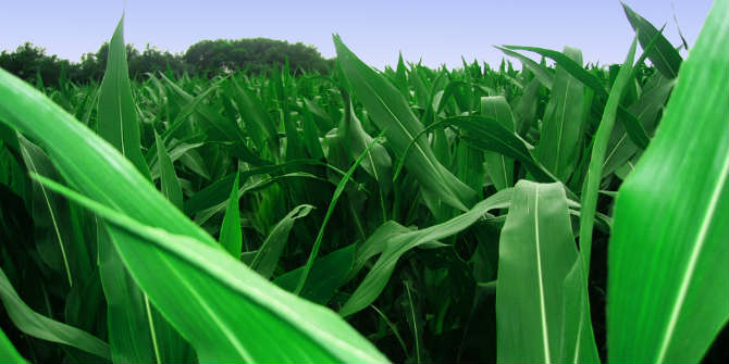 South African maize exports should access new markets