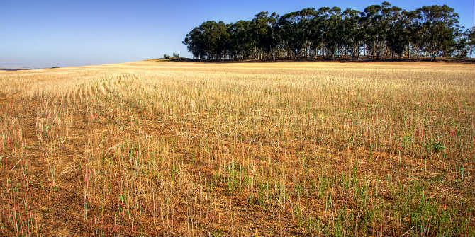 Increased Investment in Research could potentially save South Africa's Wheat Sector