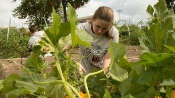 student works in garden