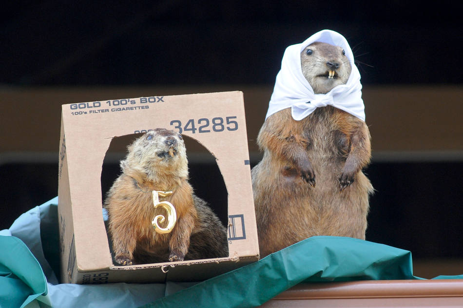 Pine Grove Grundsau Lodge No. 5 stuffed groundhogs Groundhog Grover, left, and his bride Sweet Arrow Sue, right, predict six more weeks of winter during the annual Groundhog Day Celebration with Grover the Groundhog in Pine Grove, Pa., Saturday, Feb. 2, 2013. (AP Photo/The Republican-Herald, Jacqueline Dormer)