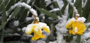 Early spring snowstorm sets records in the Midwest