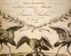 Birds & Fowles of Various Species (Part 2)