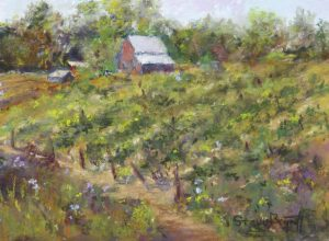 Hueners Hill Vineyard, Pastel by Steve Bennett