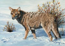 Tracks in the Snow, Painting of a coyote in snow at Yellowstone National Park by artist Linda Cruz