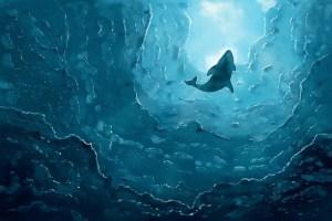Baleias do hemisfério sul correm perigo