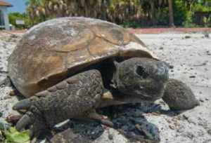 photo of a tortoise for whom we feel compassion