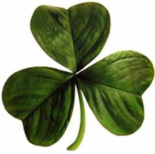 Photo of a copyright free Irish clover for Irish toasts