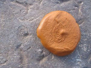Eoandromeda and Ediacaron fossil