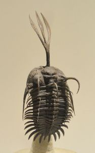 Trilobite from the Devonian