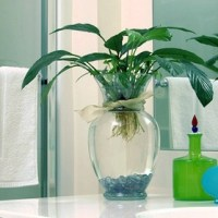 Best Houseplants to Filter Toxins in Your Bathroom