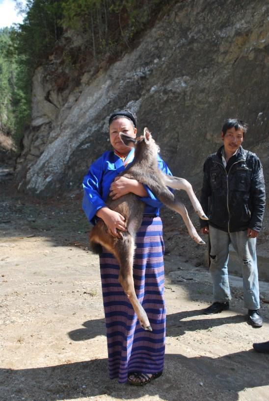 Abandoned bay deer in Bhutan