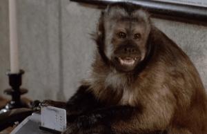 monkey-shines-ella