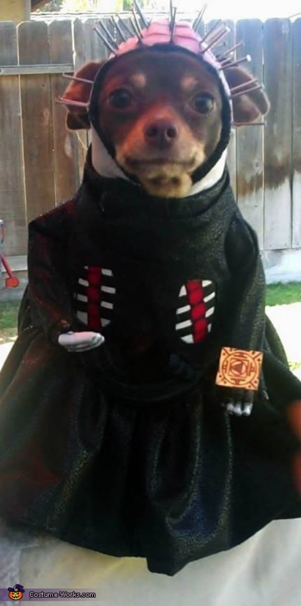 Dogs Halloween Costumes Pictures