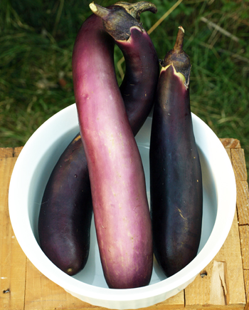 Eggplants and Baba Ganoush