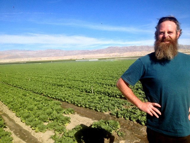 Acres and acres of head lettuce in the Imperial Valley.