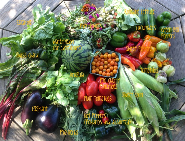 8/25/15, CSA on farm share #13, week A.