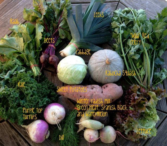 10/20/15, CSA share #21, on-farm week A.