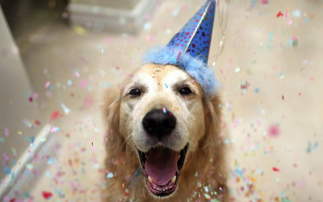 Party Dog with Birthday Hat