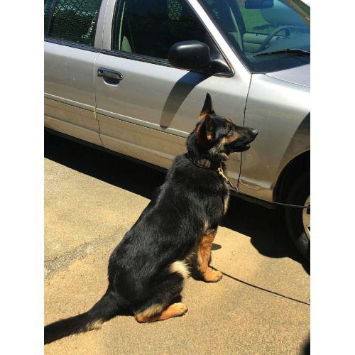 Medium Crop Of Police Dog Breeds