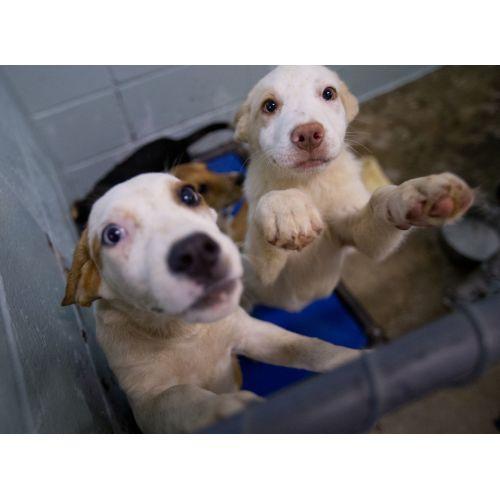 Medium Crop Of Lexington Animal Shelter
