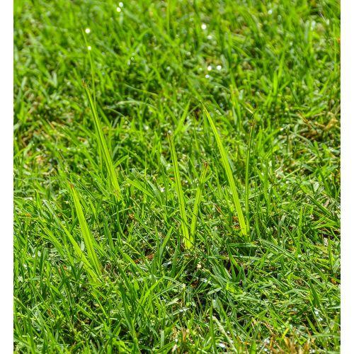 Medium Crop Of Lawn Doctor Reviews