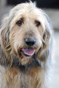 Cute Dog That Looks Like A Mop Name Dog That Looks Like A Mop Name Shaggy Dog That Looks Like A Mop Dog That Looks Like A Mop
