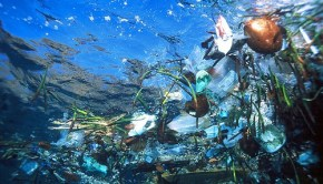 BPA from hard plastics contaminating oceans and beaches