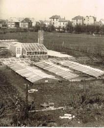 Das erste Gewächshaus 1957