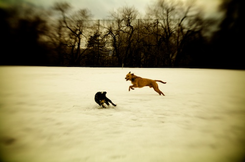 Puppy Snow Play