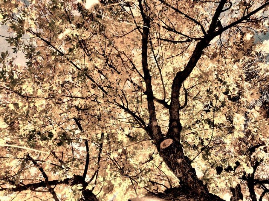 Bleached Autumn
