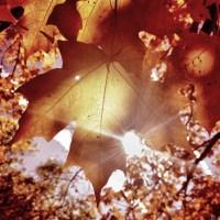 Sunflare Leaves | Blurbomat.com
