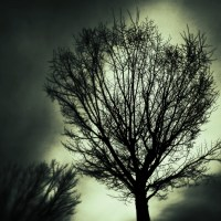 Another Bare Tree | Blurbomat.com