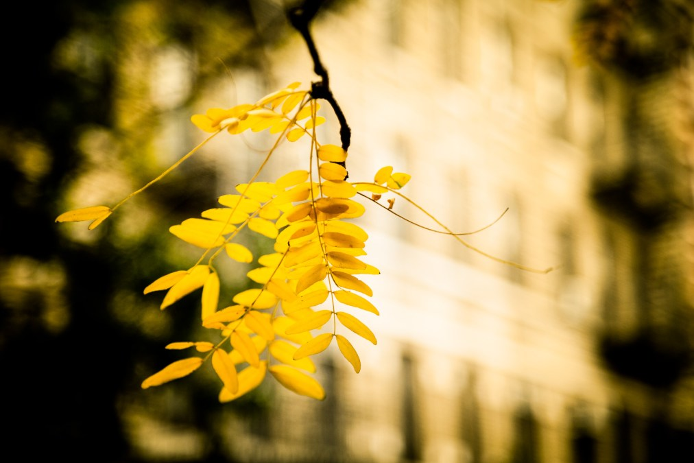 Last Vestige of Autumn