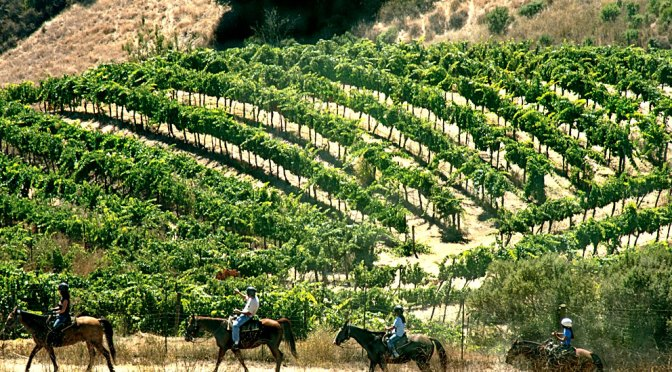Cooper-Garrod Vineyard Riders in Francville