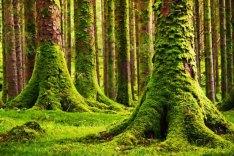 Moss3
