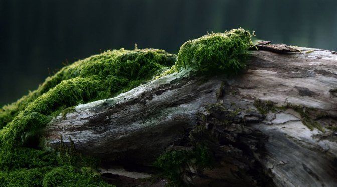 Magical Moss