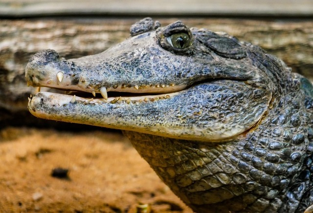 reptile-3350309_960_720.jpg