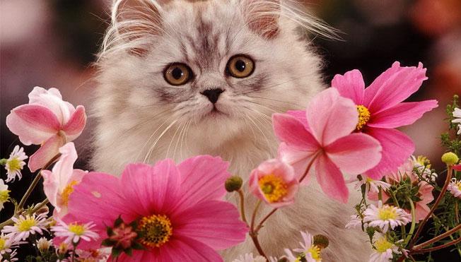 AMERICA'S NEXT TOP 10 CATS!
