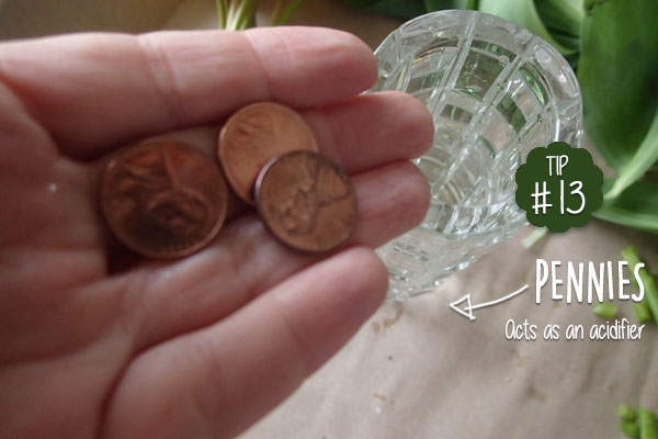 Keep-cut-flowers-fresh-in-the-vase-with-copper-pennies